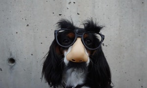 disguise_nose_glass_dog_funny-140209